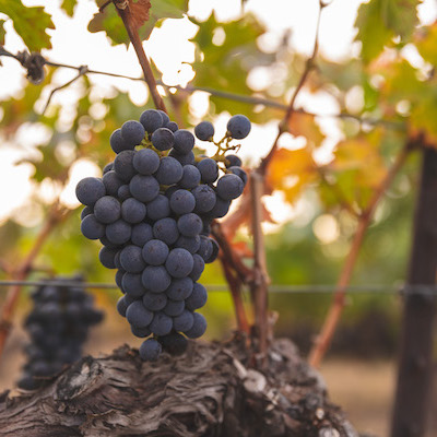 Wine companies press more from lithium batteries