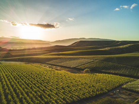 Wine industry runs on lithium batteries